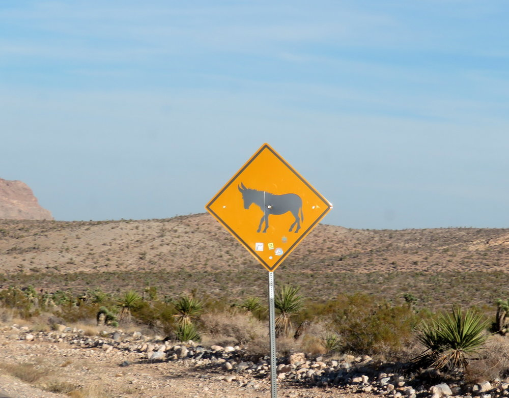 No wild burro sightings