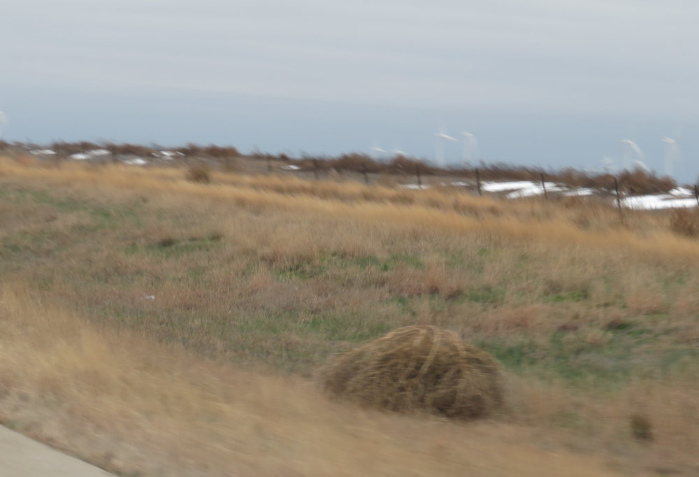 Texas-sized tumbleweeds skipped and danced across the highway in the gusty winds.