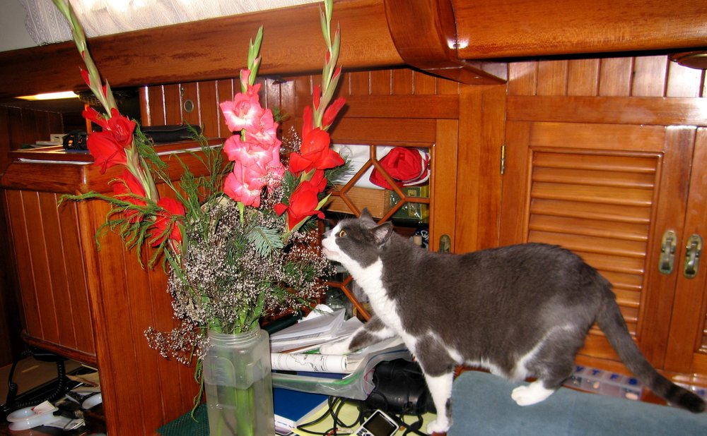 No Christmas tree, but Jelly took time to smell the roses( I mean gladiolas) in Talcahuano, Chile