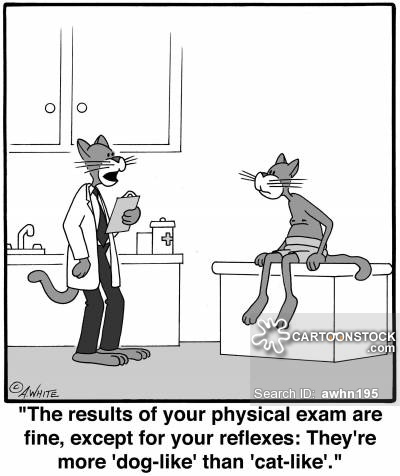 animals-cat-dog-cat_like-reflex-medical_exam-awhn195_low.jpg