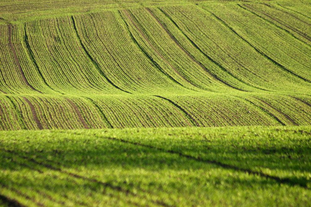 Edgewood Farms 2.jpg