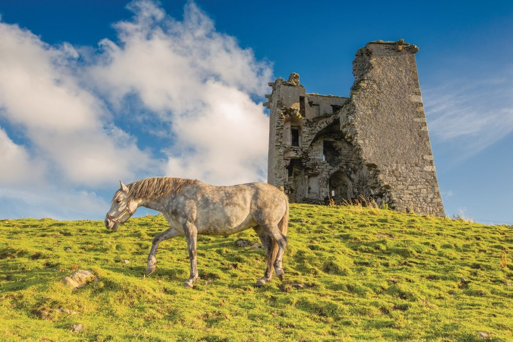A pony grazes before the ruin of Renvyle Castle in the most north-west part of Connemara. Photo by Romona Robbins