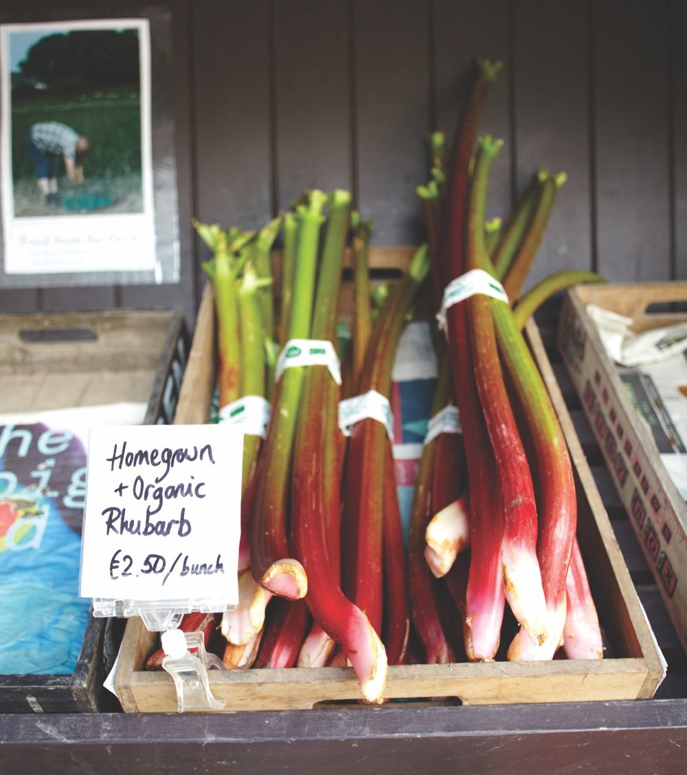 Homegrown and organic Rhubarb, Ballymaloe Cookery School