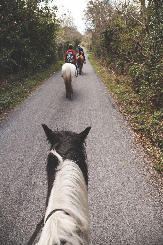 connemara-life-connemara-pony-5.jpg