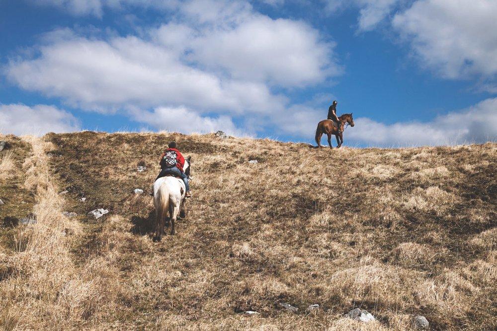 connemara-life-connemara-pony-9.jpg