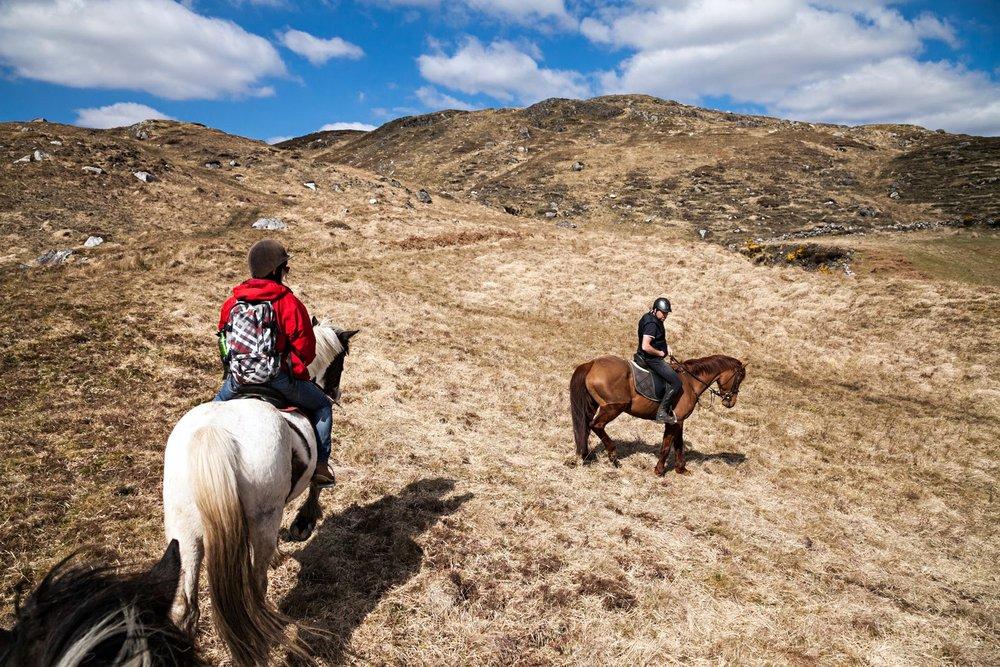 connemara-life-connemara-pony-43.jpg