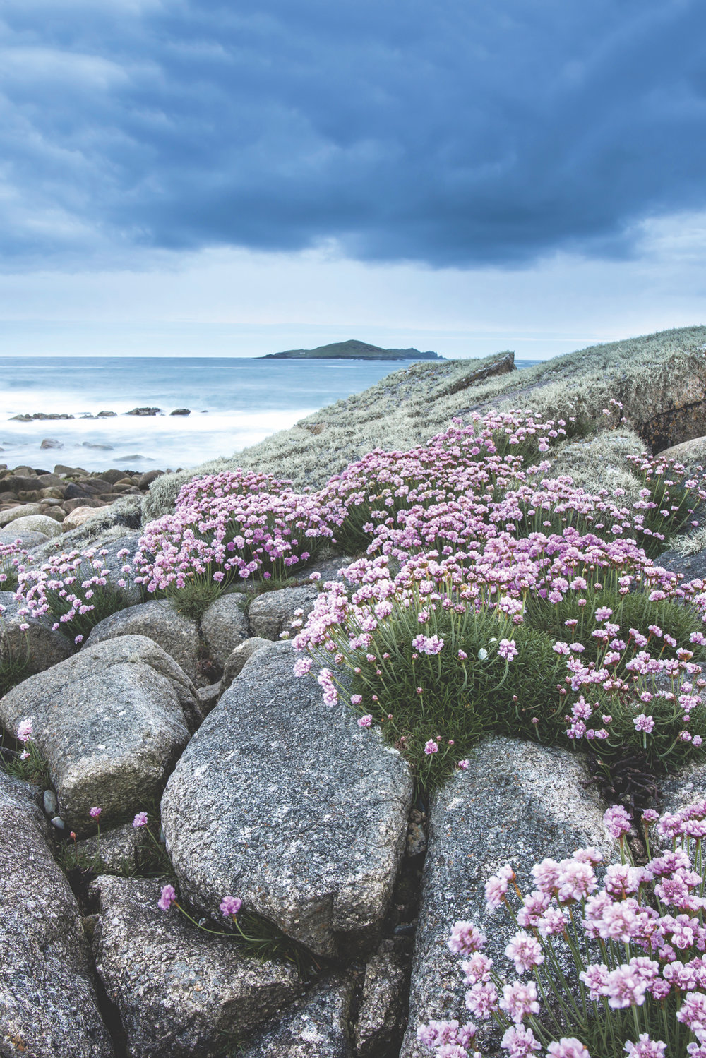 The tidal island of Omey while the sea thrift was in full bloom; Photo by Mark Furniss Photography