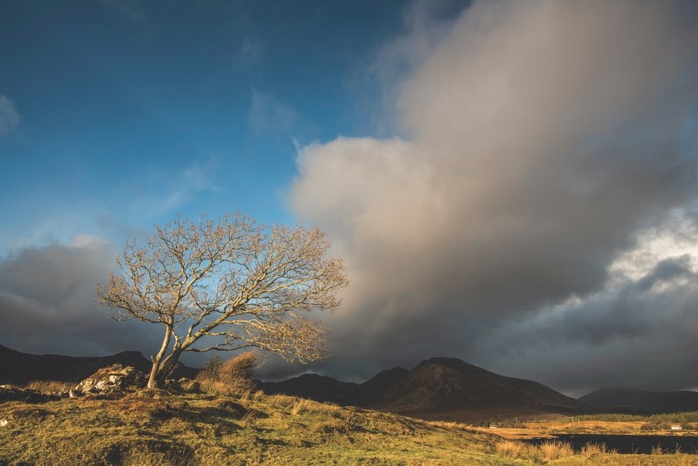 A lone wind-battered tree; Athry, Recess – Photo by Mark Furniss Photography
