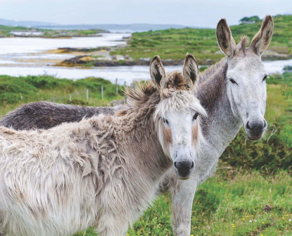 Donkeys hanging out in the countryside – Photo by Ruurd Corpel