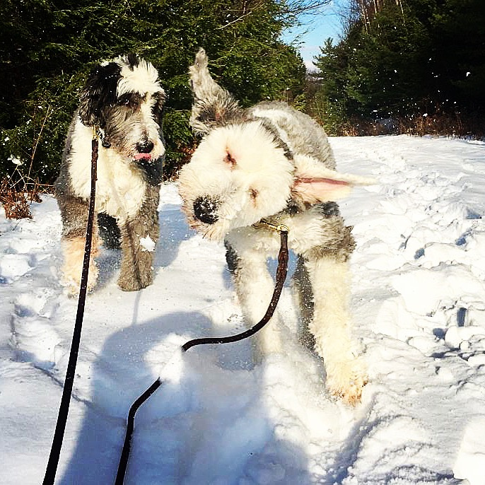 """Alix and her staff are wonderful!! Our pups look forward to their daily walks with their buddies! All staff are professional, more than capable of handling our large dogs and we feel they really do have our pups' best interest in mind at all times. I can't praise them enough."" -SUSAN FERNANDEZ"