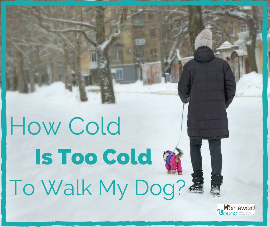 Is it too cold to walk my dog?