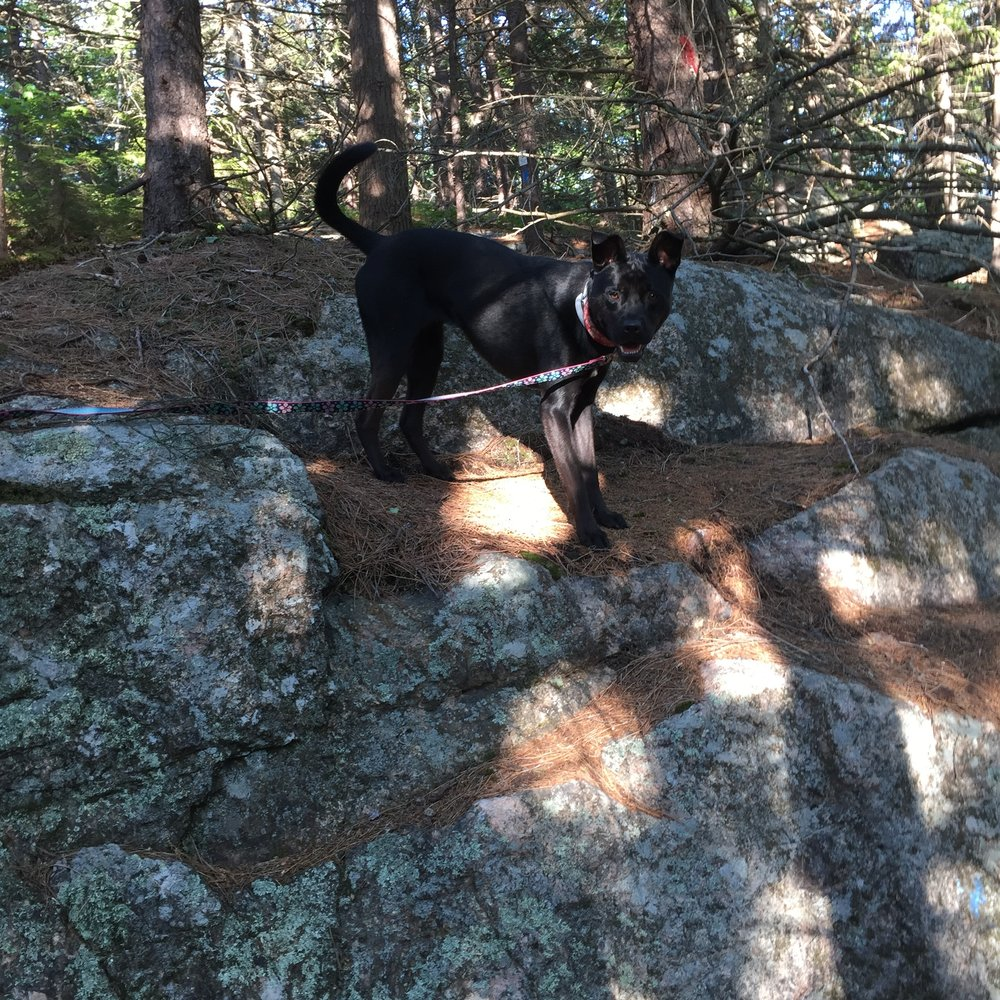 CiCi having fun in the Belknap Mountain Range Trails