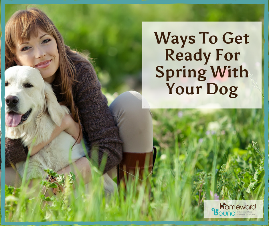 Prepare now to enjoy beautiful spring weather with your dog!