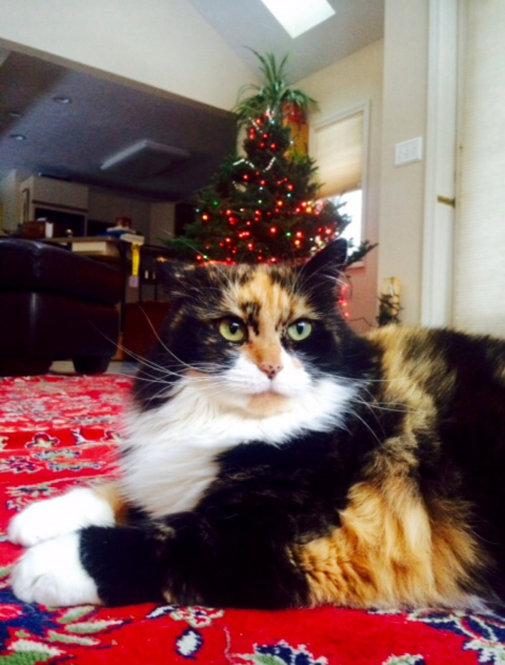 Sophie Cat looking quite proud of her earlier handiwork, with the tree in the background, now secured to the wall!