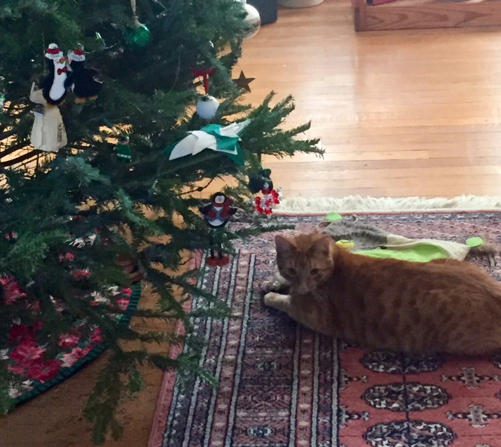 Avoid Pet Christmas Tree Catastrophes During the Holidays — Homeward ...