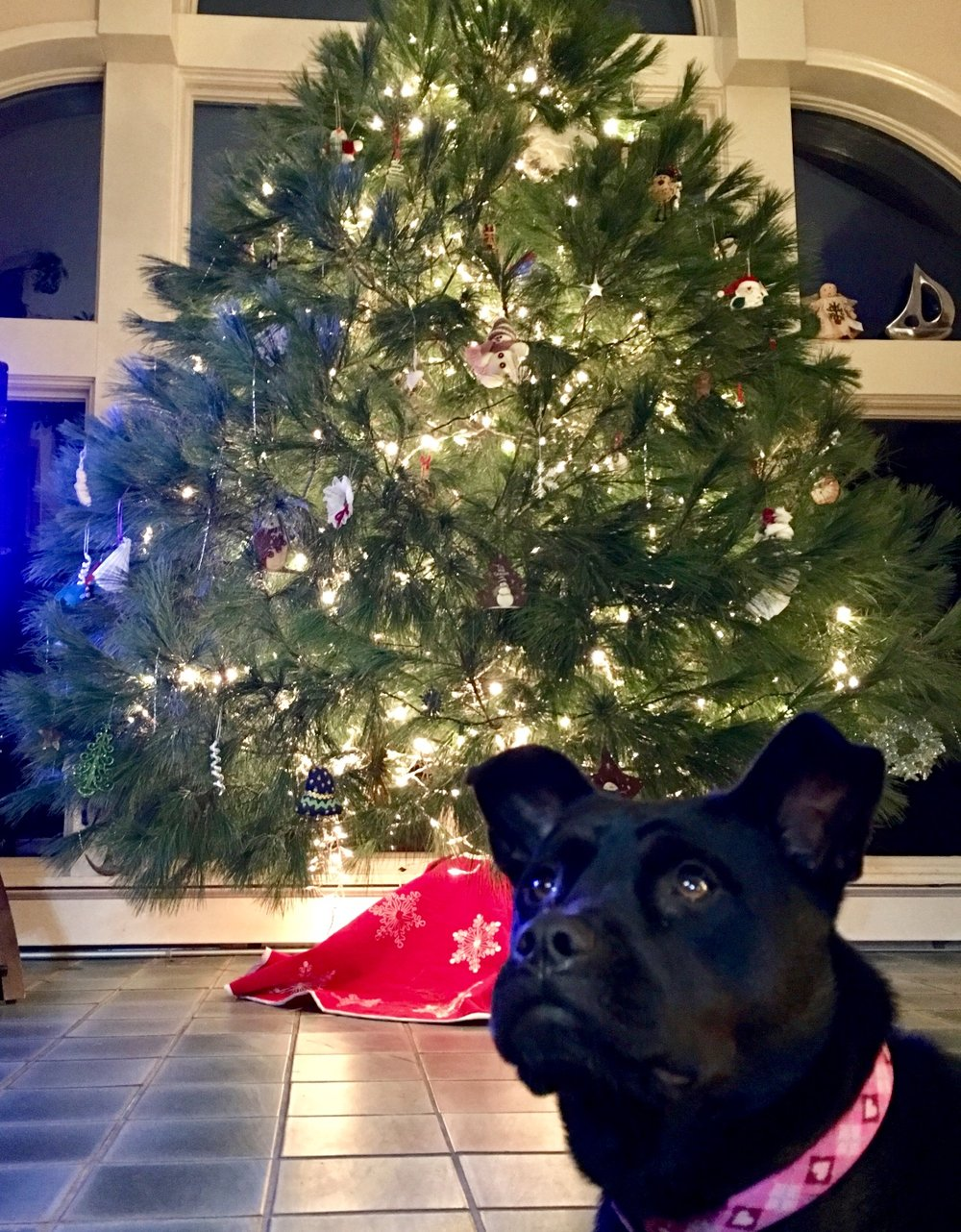 CiCi knows she is being watched closely to avoid any Christmas tree catastrophes!