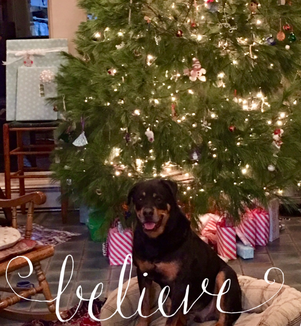 Gator truly believes in Santa Claus and the magic of Christmas!