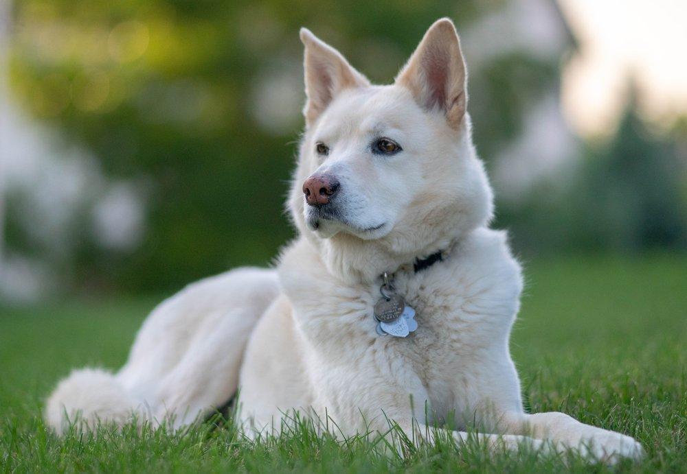 Homeward Bound Dog Walking Laconia, Gilford, Belmont, Meredith, NH