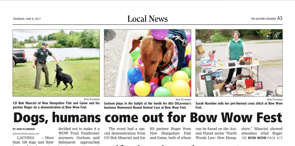 A dog enjoying the ball pit at NH Humane Society's Bow WOW Fest sponsored by Homeward Bound Professional Animal Care, LLC.