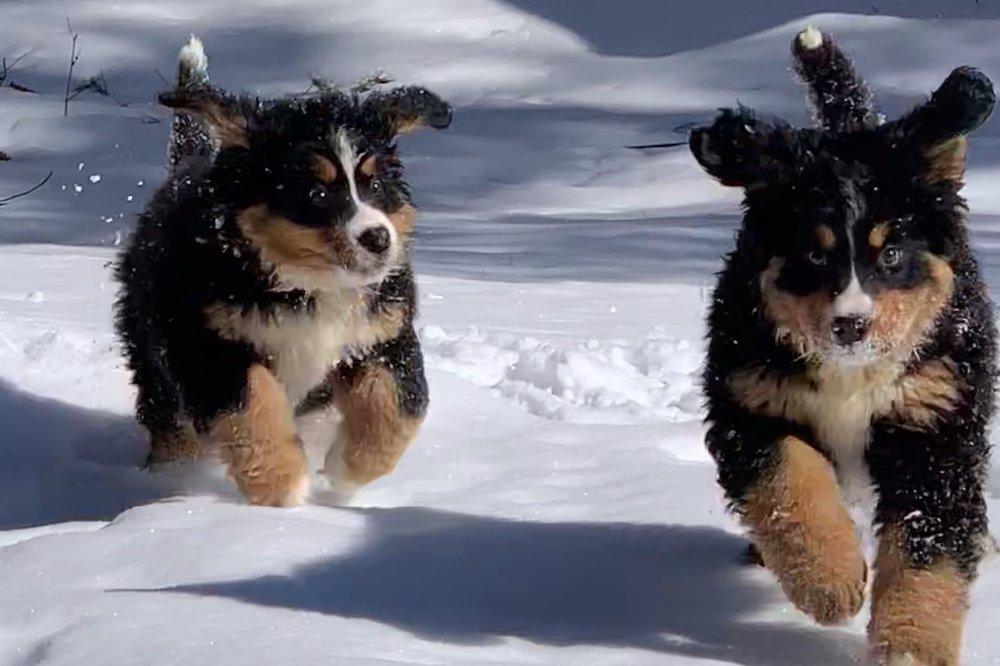 Homeward Bound Dog Walking Lakes Region