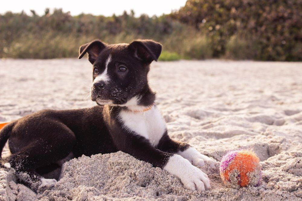 Homeward Bound Animal Care  Summer Dog Walks, Year Round Dog Walking  National Puppy Day, Choosing a Puppy  Lakes Region NH