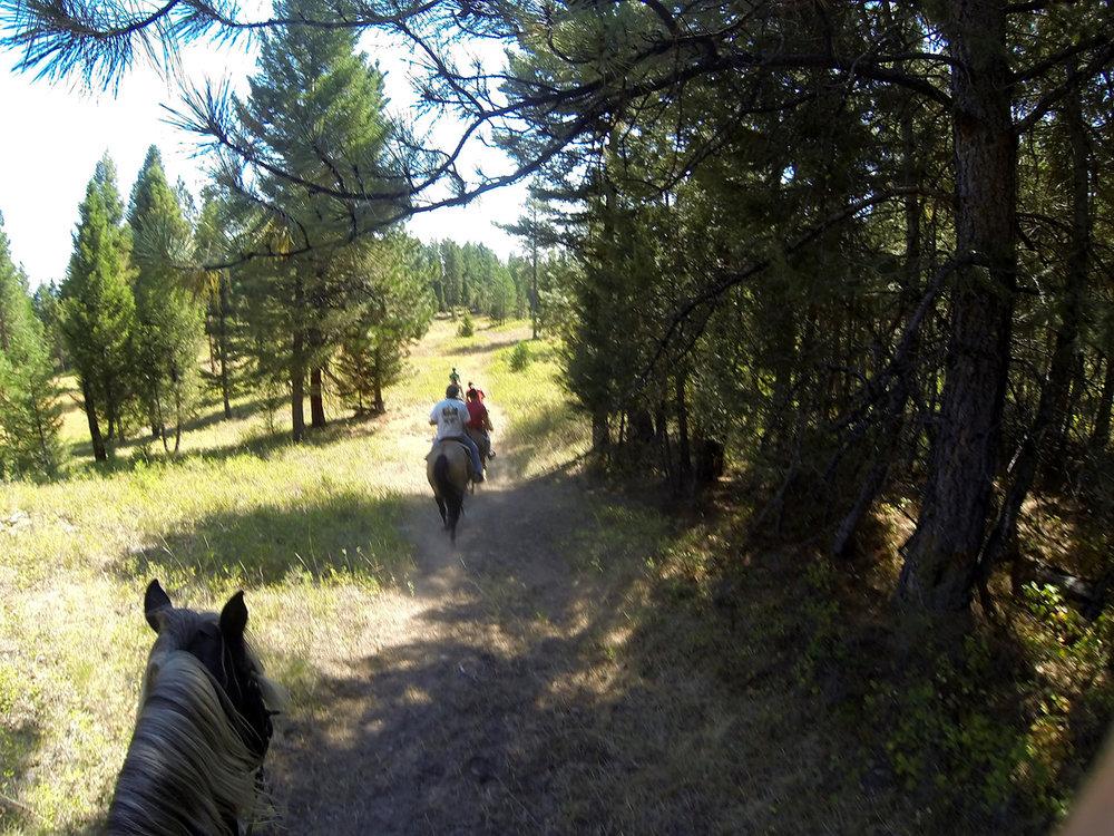 Horse-riding-02.jpg
