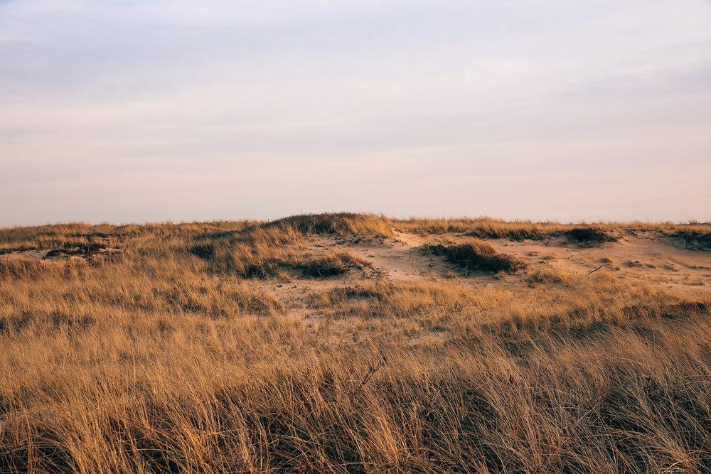 Montauk Dunes December 2017.jpg