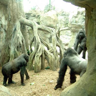 0101 ZNE Gorilla-1039c1.jpg