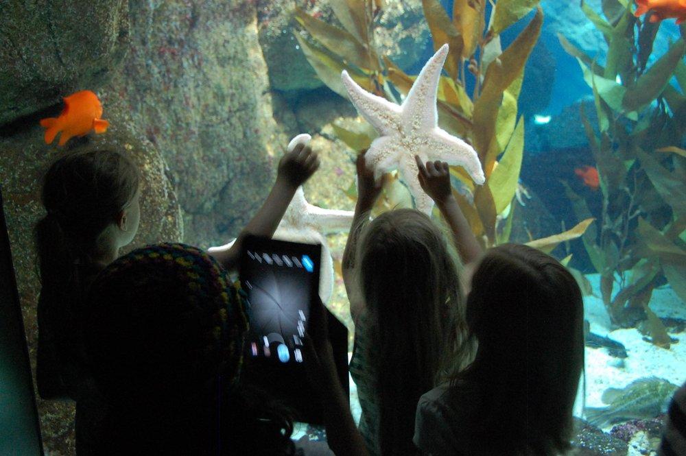 Aquarium habitat design.JPG