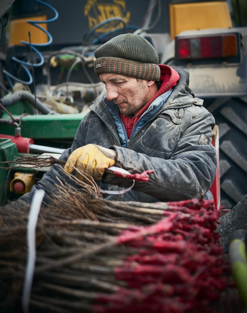 Vineyard contrator planting vines