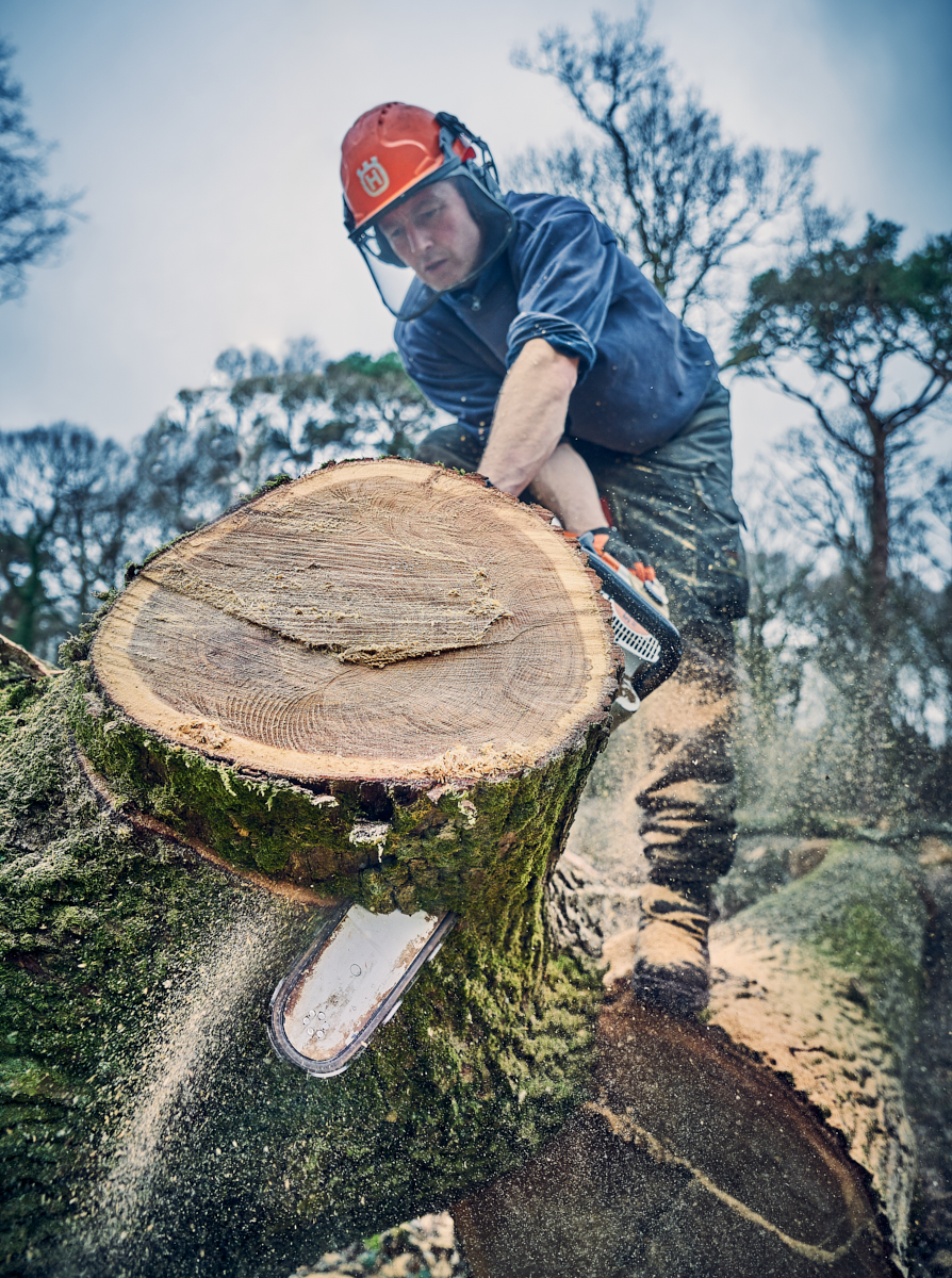 Toby cutting oak