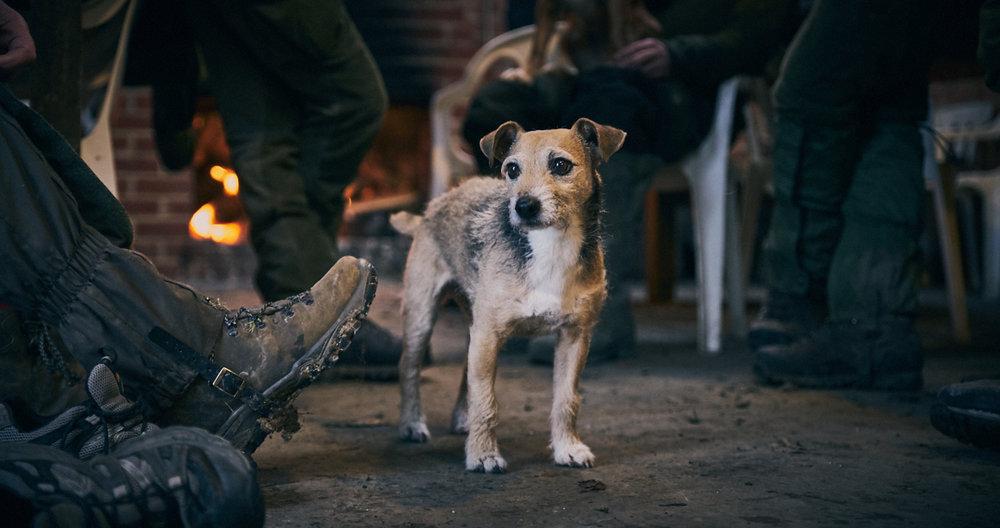 Hunting terrier
