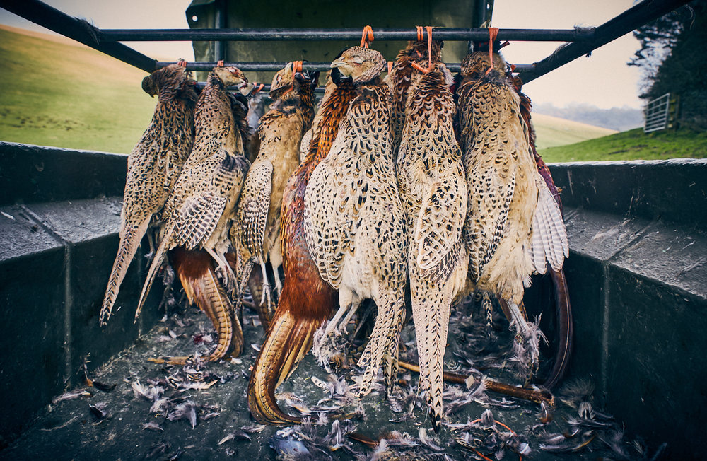 Shot pheasants on the van