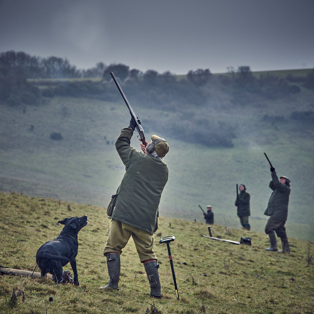 Shooting pheasants