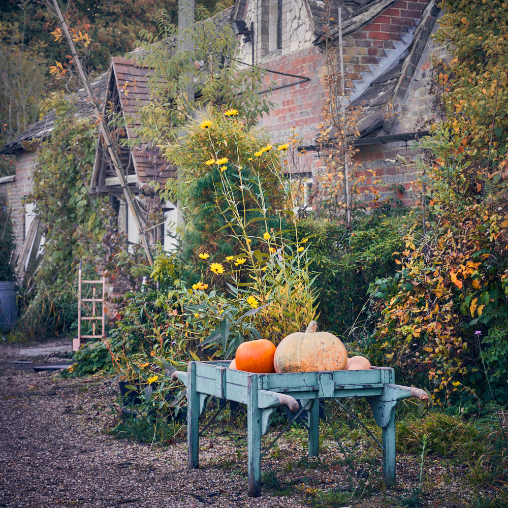 Pumpkins, Wiston Garden
