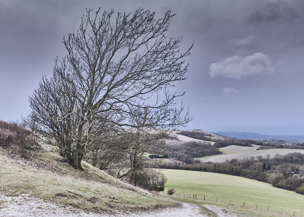 The South Downs at Washington, winter