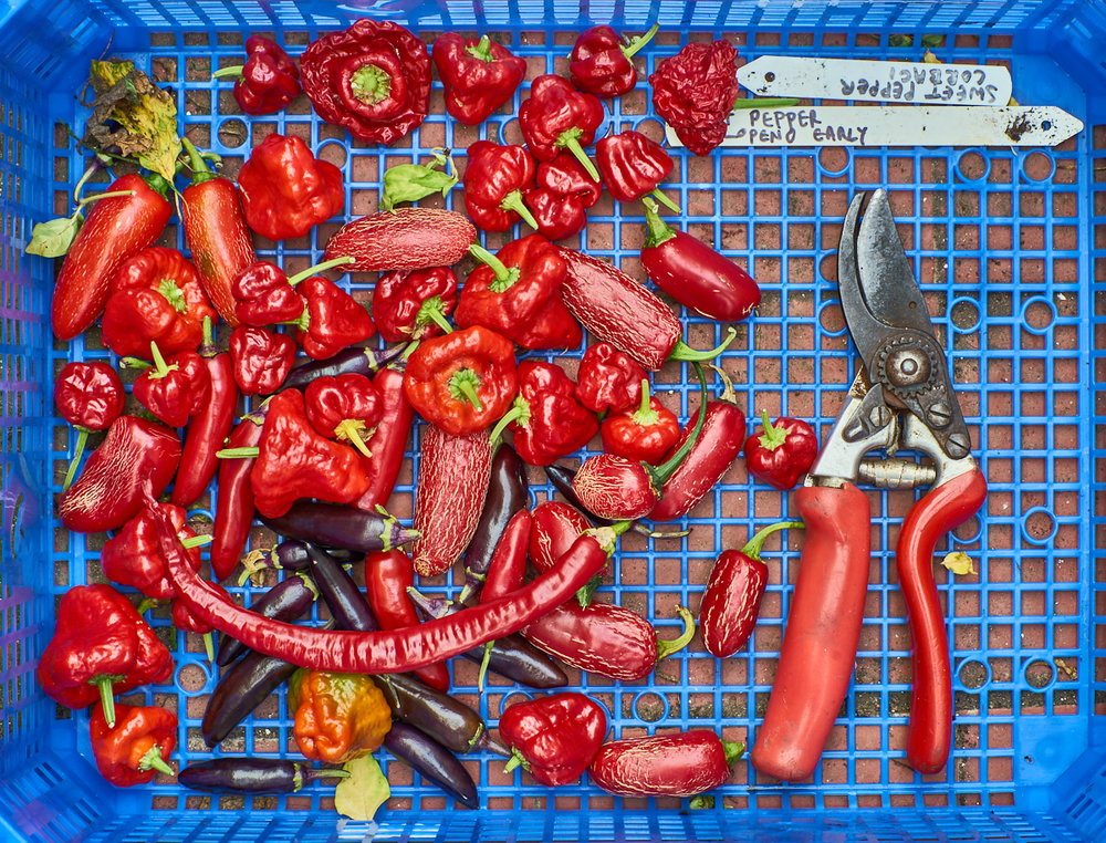 Cut sweet peppers