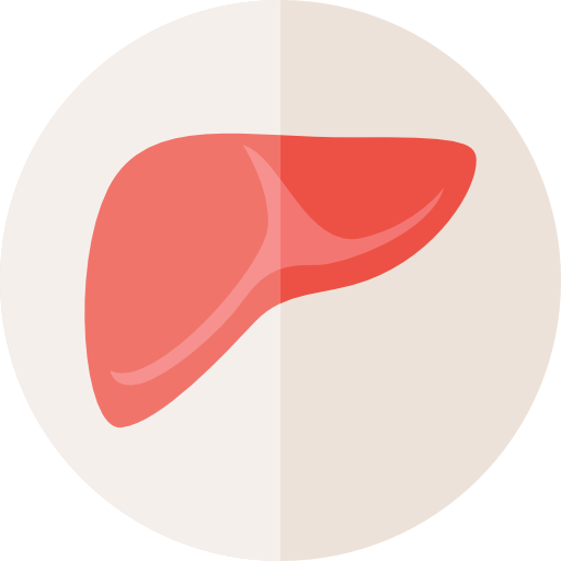 Scientists at the University of South Carolina have generated and purified liver cells from human stem cells