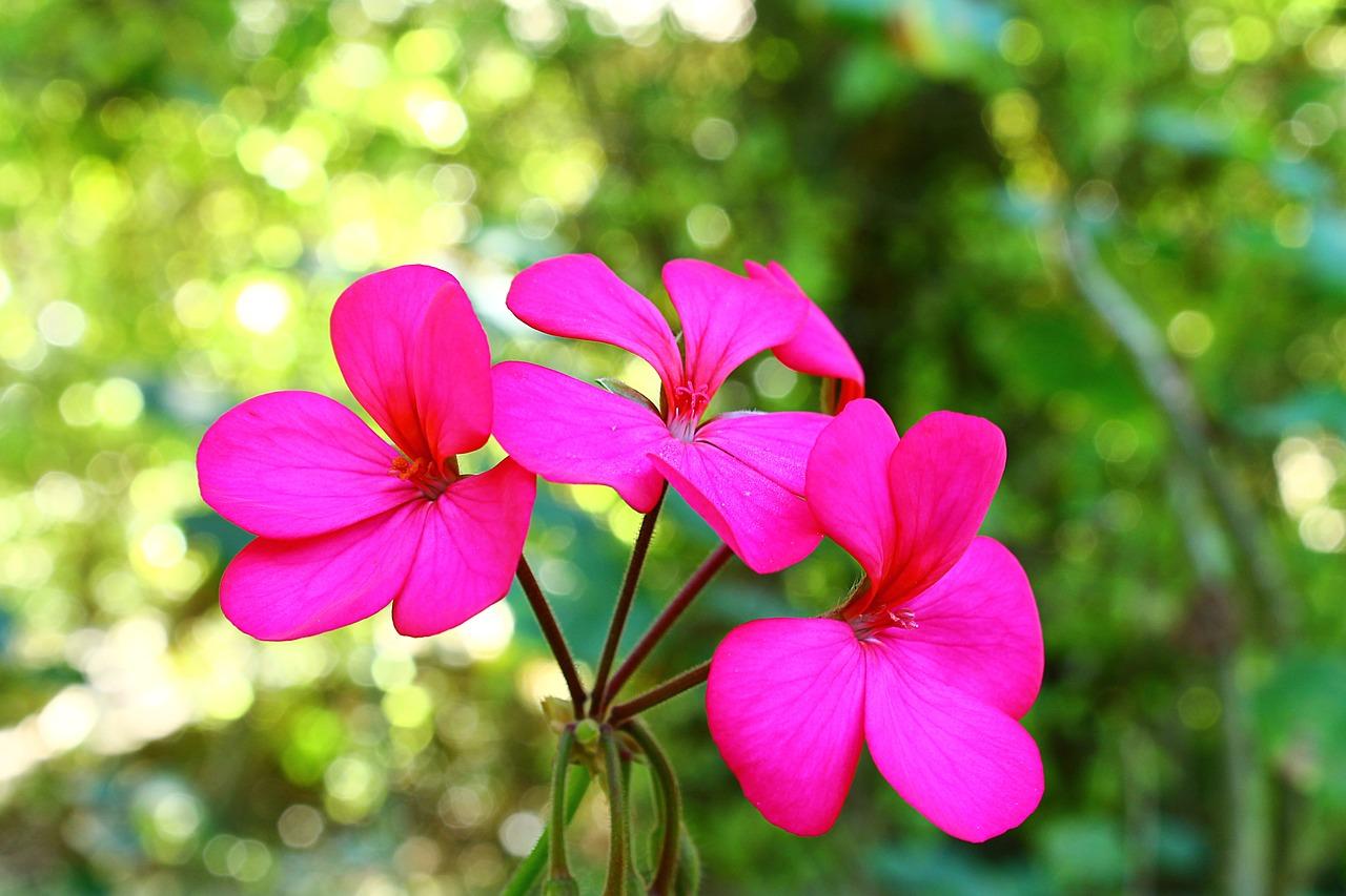 Annuals Perennials Vines Siffring