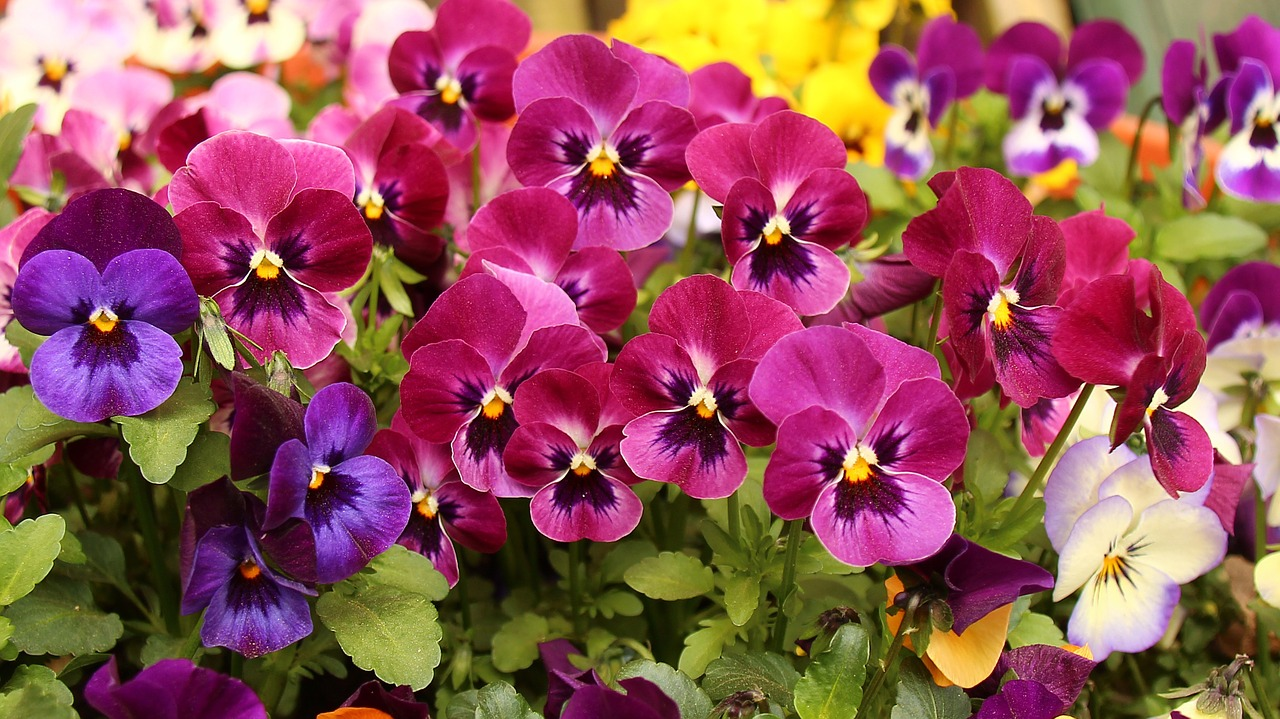 Perennials Annuals Vines List Siffring