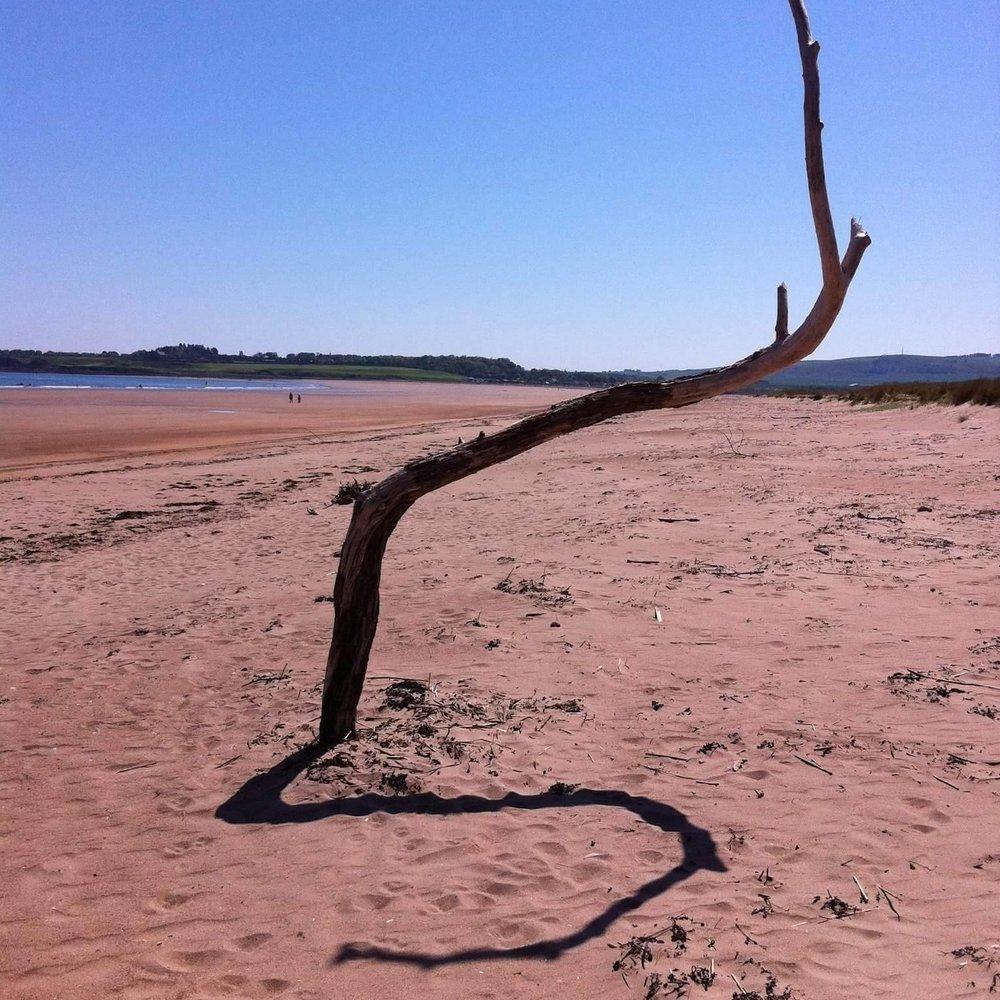 TFPQ - Snake In The Sand.jpg