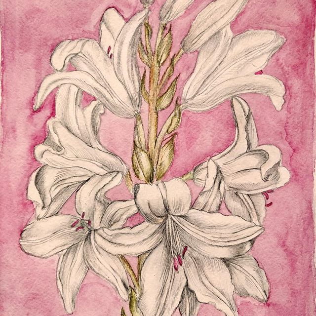 Every flower is a soul blossoming in nature 👩🏻‍🎨: Flavia Nistor  #artistiquemagazine #artistique #art #flowers #peace #pink #white #nature #blossom #happylife