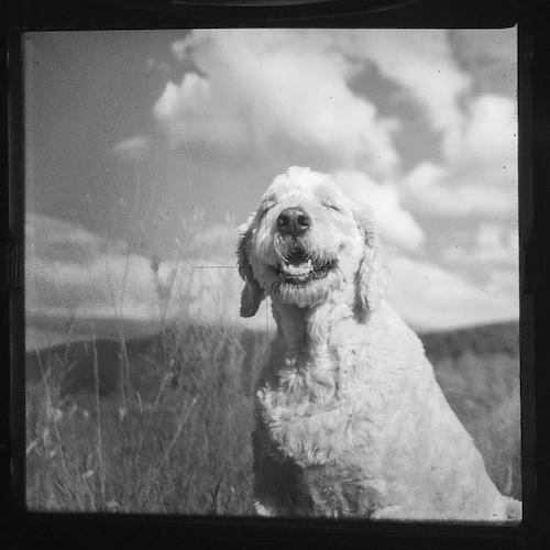 smiley dog portrait photographer.jpeg