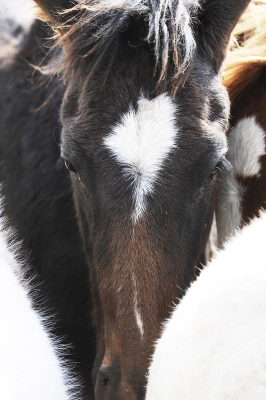 Face of Brown Star   Digital Photograph, 2017, Animal Series