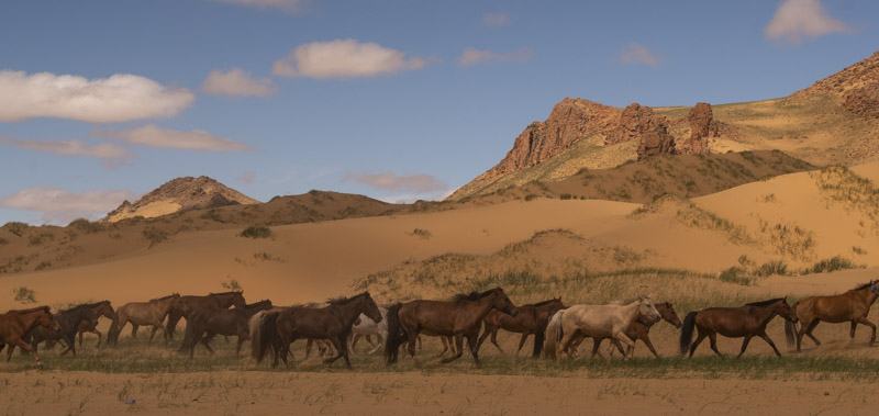 WILD HORSES IN TOW   2018, digital print, numbered, signed, edition of two