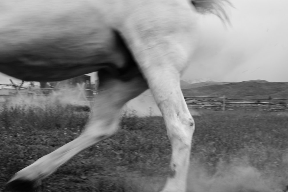 GALLOP THROUGH TIME 3/3   At Windwalkers Ranch, 2018, digital print numbered, signed, edition of four