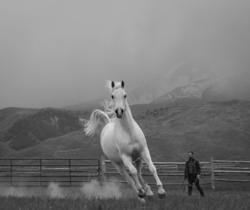 FREEDOM   At Windwalkers Ranch, 2018, digital print numbered, signed, edition of four
