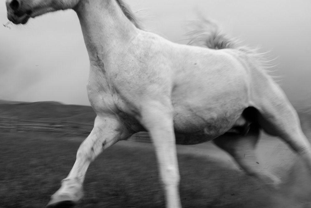 GALLOP THROUGH TIME 1/3   At Windwalkers Ranch, 2018, digital print numbered, signed, edition of four