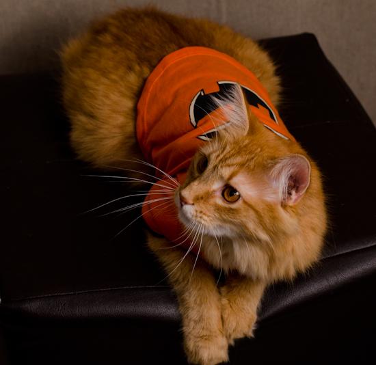 Fizzbert in pumpkin costume