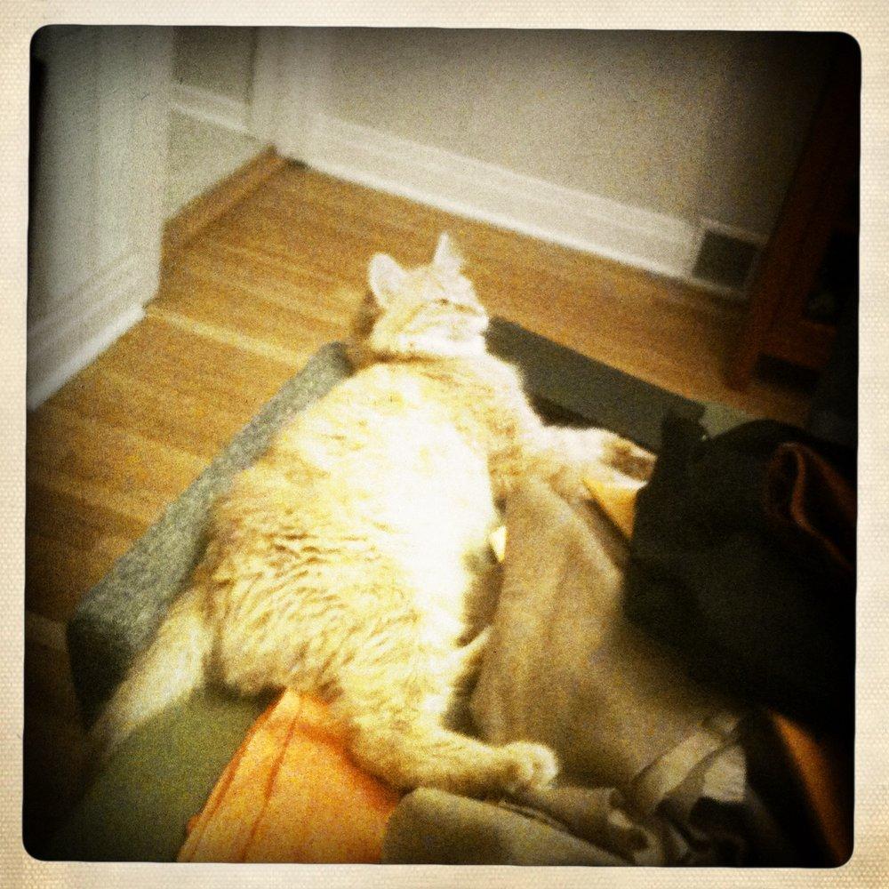 Fizzbert relaxes on fabric